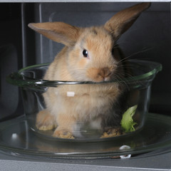 live rabbit in the microwave