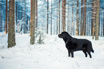 Free in Snowy Forest