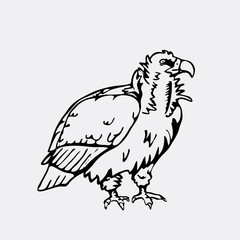 Hand-drawn pencil graphics, vulture, eagle, osprey, falcon, hawk, scavenger.