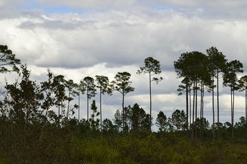 View of Seminole State Forest under a cloudy sky.