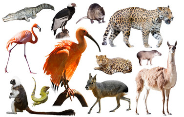 south america animals isolated