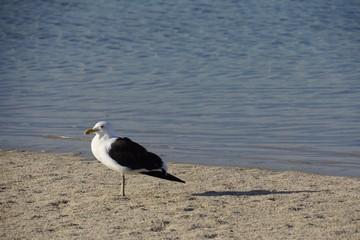 Möve am Strand mit Wasser im Hintergrund