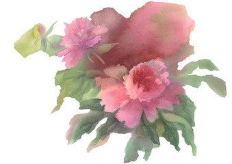 pink peony watercolor isolated background