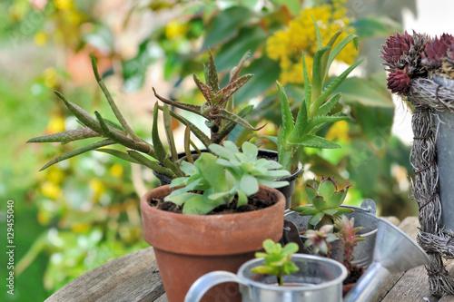 Plantes grasses en pot sur table de jardin fotos de archivo e im genes libres de derechos en - Plantes grasses en pot ...