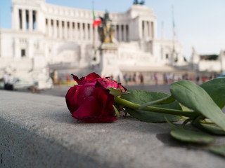 rose in piazza Venezia