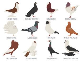 Poultry farming. Pigeon breeds icon set. Flat design
