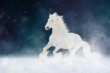 Photo sur Aluminium White Shire horse stallion runs gallop over star sky background
