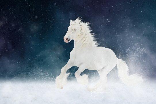 White Shire horse stallion runs gallop over star sky background