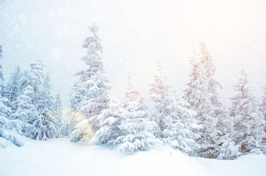 Mystical winter landscape of trees in sunlight during snowfall (