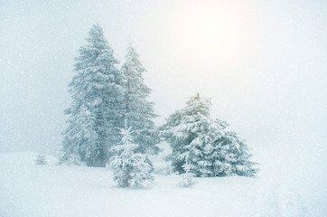 Mystical winter landscape with tree during snowfall (New Year, t