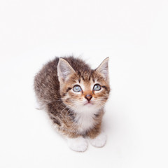 An adorable kitten looking up innocently on a white surface