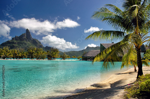 serene bora bora beach scene with palm trees green ocean and