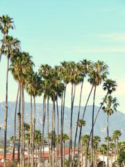 Sunny palm group in Santa Barbara, California