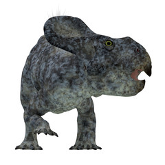 Protoceratops Dinosaur Head - Protoceratops was a herbivorous Ceratopsian dinosaur that lived in Mongolia in the Cretaceous Period.