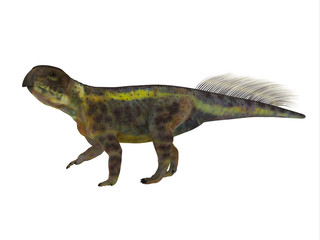 Psittacosaurus Dinosaur Side Profile - Psittacosaurus was a Ceratopsian herbivorous dinosaur that lived in Asia in the Cretaceous Period.