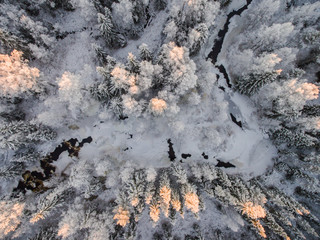 Snow covered forest at sunset, Finland