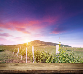 Foto op Aluminium Red wine with barrel on vineyard in green Tuscany, Italy
