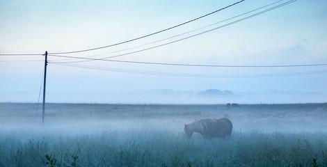 Horse in field, Finland