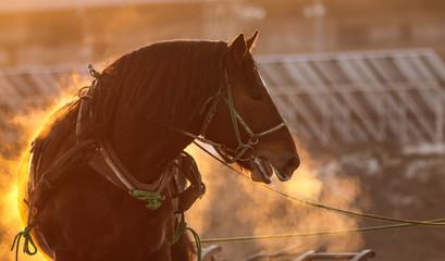 競馬場の馬