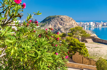Flowers at Santa Barbara Castle in Alicante, Spain