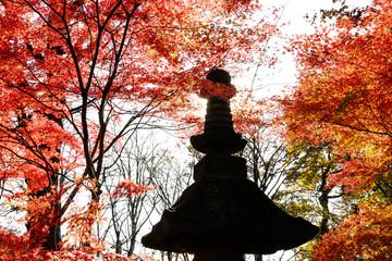 日本庭園の楓