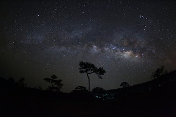 Milky Way and silhouette of tree at Phu Hin Rong Kla National Pa