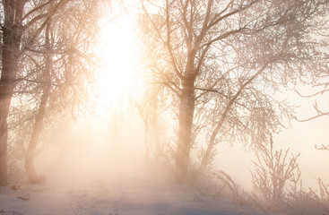 Winter landscape. The sun shines in the photo camera. the trees