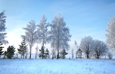 Winter landscape. Frost frost on the trees. Extreme cold. hoarfr