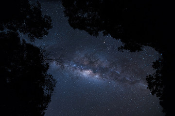 milky way over the forest at the mountain