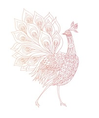 Coloring book page .Peacock ornamental. Fantasy bird. Vector illustration hand drawn. Thin line drawing.
