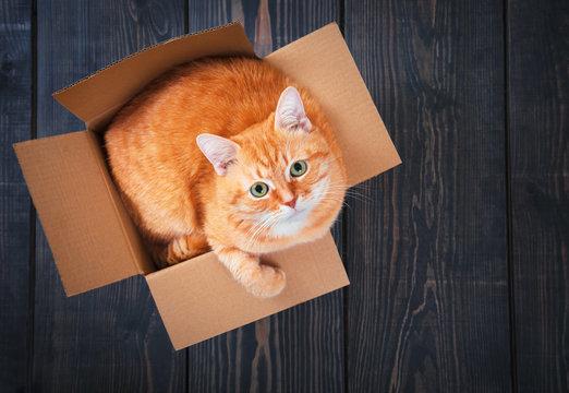 Cute red cat in a cardboard box.