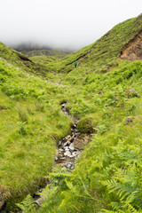 ferns landscape in Scotland