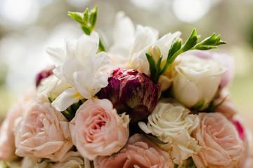 spring roses flowers blossom