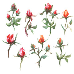 Watercolor raster illustration of set roses.