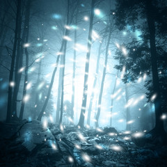 Wall Mural - Fantasy blue color foggy forest tree landscape scene with mystic firefly lights.
