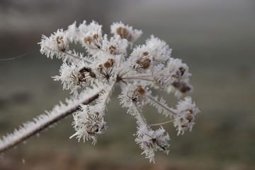 Eisblume, Winterwonderland