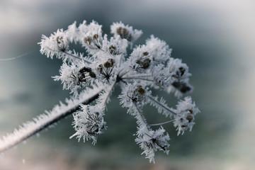Eisblume, Winterlandschaft
