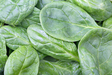 green spinach leaves background