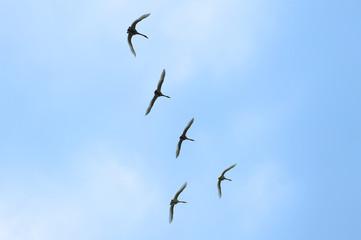 Flying birds on the blue sky