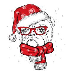 Bulldog in a Christmas hat and sunglasses. Vector illustration for a card or poster. Print on clothes. Cute puppy. Pedigree dog. Winter holidays. New Year's and Christmas.