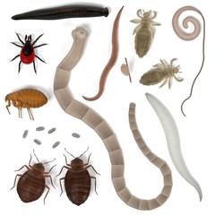realistic 3d render of human parasites