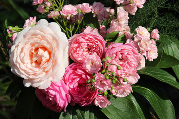 Romantic bouquet of pink roses. Summer garden.