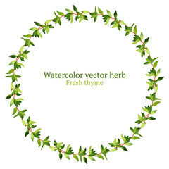 Watercolor vector wreath with thyme
