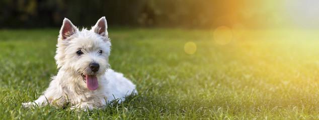 Strona internetowa sztandar szczęśliwy psi szczeniak jak kłamać w trawie
