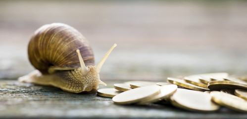 Website banner of golden money coins and snail