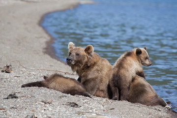 female bear with sweet cubs