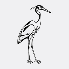 Hand-drawn pencil graphics, heron. Engraving, stencil style.