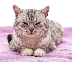 Cat on a purple blanket.