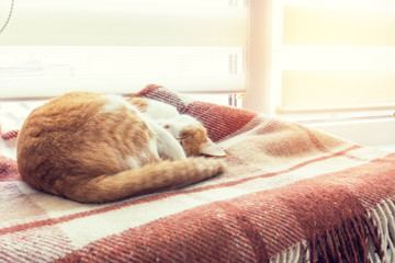 Red and white kitty sleeping in warm wool plaid blanket on a windowsill. Cozy home concept. Coloring and processing photo