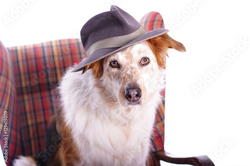 Hund Tragt Einen Hut Stock Photo And Royalty Free Images On